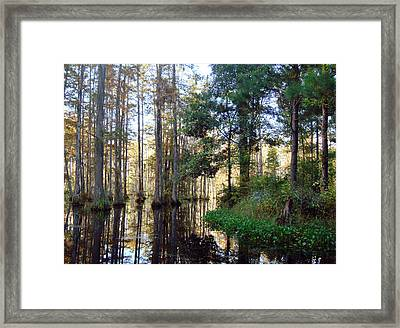 Framed Print featuring the photograph Cypress Gardens 2 by Ellen Tully
