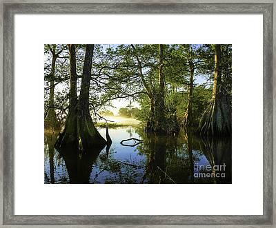 Cypress Glow Framed Print by Teresa A and Preston S Cole Photography