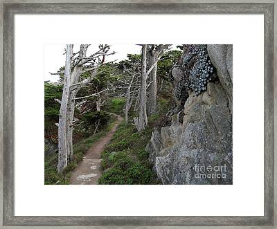 Cypress Grove Trail Framed Print