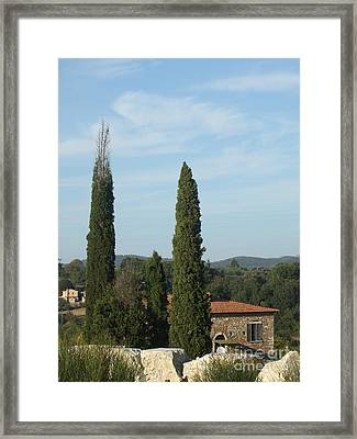 Cypress In Rapolano Framed Print