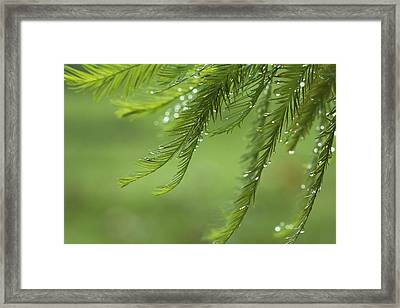 Framed Print featuring the photograph Cypress In The Mist - Art Print by Jane Eleanor Nicholas