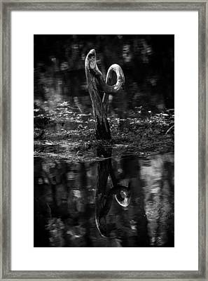 Cypress Knee Framed Print