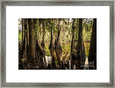 Cypress Knees On Caddo Lake Framed Print