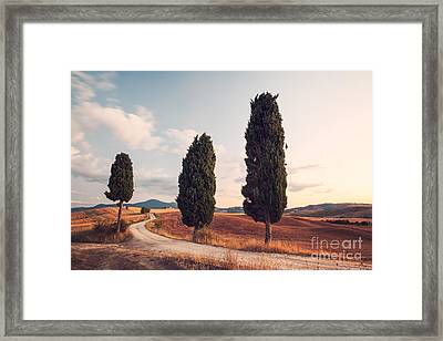 Cypress Lined Road In Tuscany Framed Print