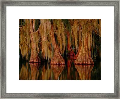 Cypress Maze Framed Print
