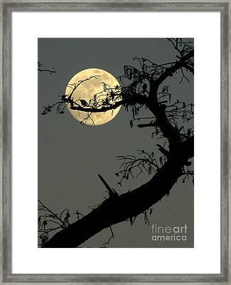 Cypress Moon Framed Print by Joe Jake Pratt