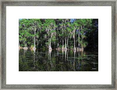 Cypress On Rainbow Framed Print by Bob Jackson