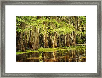 Cypress Reflection On Caddo Lake Framed Print