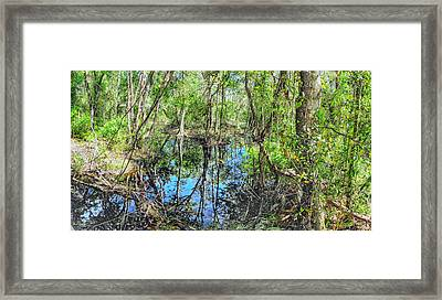 Cypress Reflections Framed Print by C H Apperson