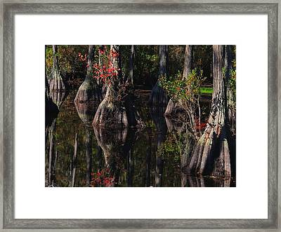 Cypress Reflections Framed Print by Laura Ragland