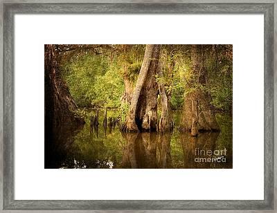 Cypress  Framed Print by Scott Pellegrin