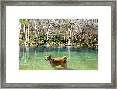 Cypress Spring Pup Framed Print by Bob Jackson