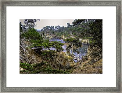 Cypress Framed Print by Stephen Campbell