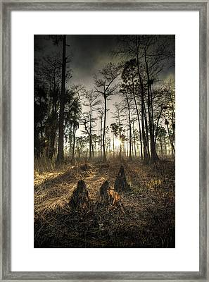 Cypress Stumps And Sunset Fire Framed Print