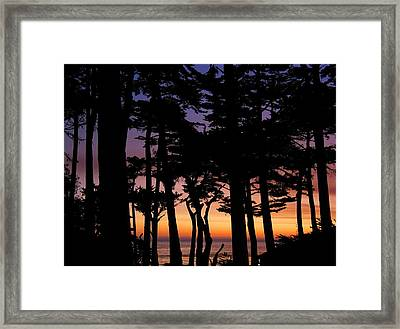 Cypress Sunset Framed Print