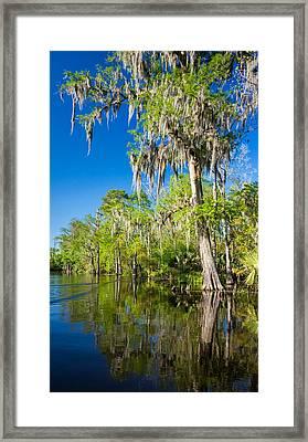 Cypress Swamp 2 Framed Print by Steve Harrington