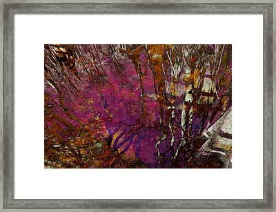 Cypress Swamp Abstract #2 Framed Print
