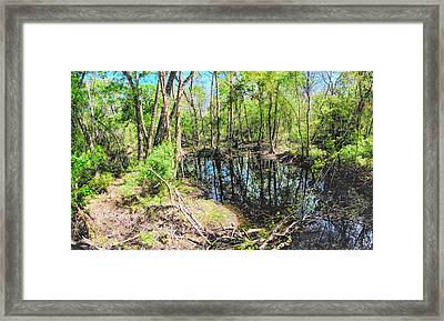 Cypress Swamp II Framed Print by C H Apperson