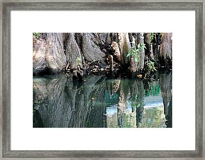 Cypress Swamp In Reflection Framed Print by Suzanne Gaff
