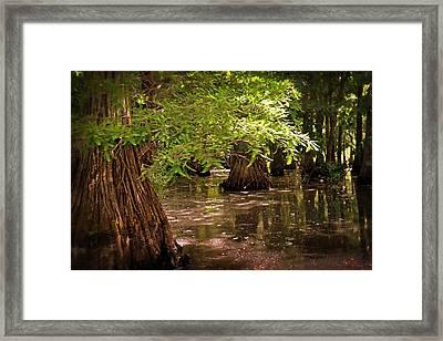 Cypress Swamp Framed Print by Marty Koch