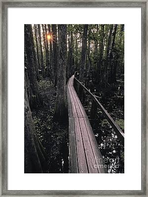 Cypress Swamp Trail Framed Print by Ron Sanford