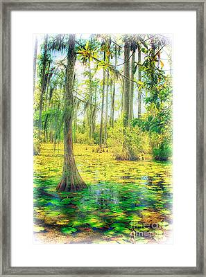 Cypress Tree And Water Lilies Framed Print by Dan Carmichael