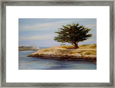 Cypress Tree At Marina Park #2 Framed Print by Tina Obrien