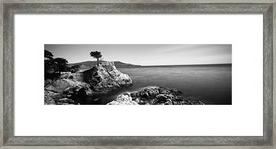 Cypress Tree At The Coast, The Lone Framed Print by Panoramic Images