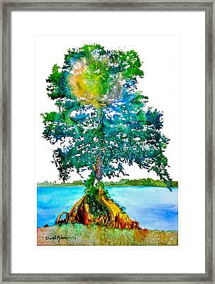 Da107 Cypress Tree Daniel Adams Framed Print