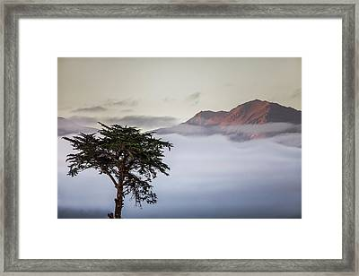 Cypress Tree In Foreground With Clouds Framed Print by James White