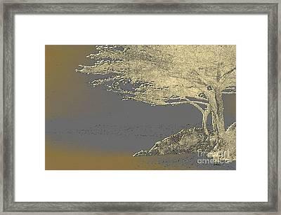Cypress Tree On Beach Framed Print by Linda  Parker