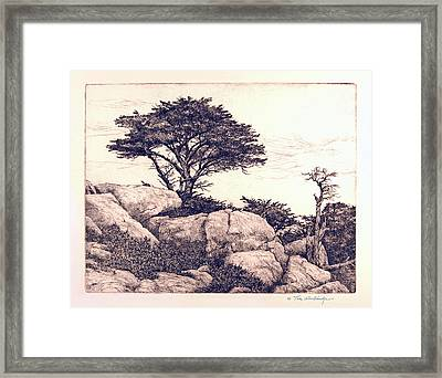 Cypress Tree Framed Print by Tom Wooldridge