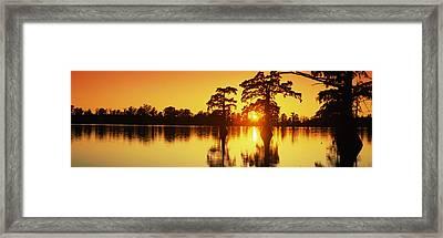 Cypress Trees At Sunset, Horseshoe Lake Framed Print