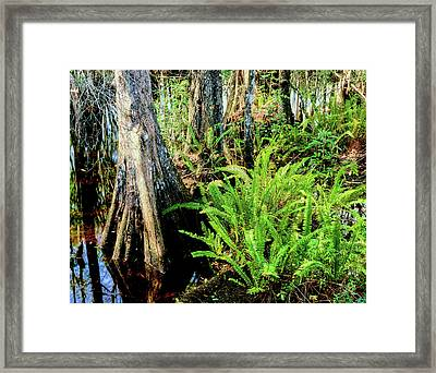 Cypress Trees In Swamp, Six Mile Framed Print