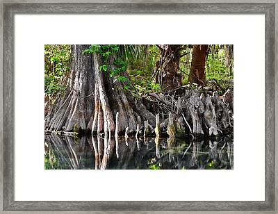 Cypress Trees - Nature's Relics Framed Print by Christine Till