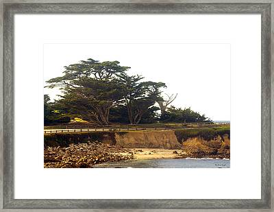 Cypress Trees On 17 Mile Drive Framed Print