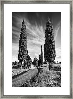 Cypress Trees - Tuscany Framed Print by Rod McLean
