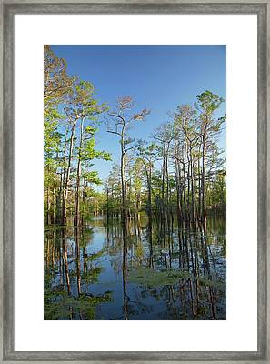 Cypress-tupelo Forest Framed Print