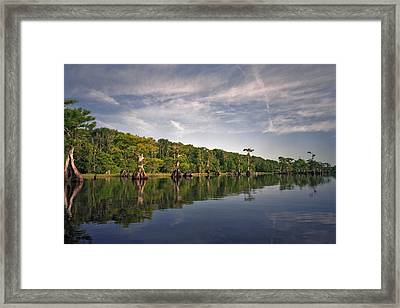 Cypress Wall. Blue Cypress Lake. Framed Print