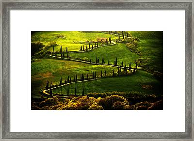 Cypresses Alley Framed Print