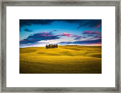 Cypresses Framed Print by Stefano Termanini