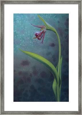 Cypripedium Arietinum Iv Framed Print