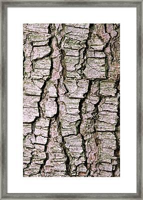 Cyprus Cedar Bark Abstract Framed Print