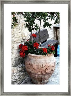 Cyprus Flowers Framed Print by John Rizzuto