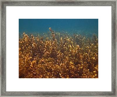 Cyril Framed Print by Pete Marchetto