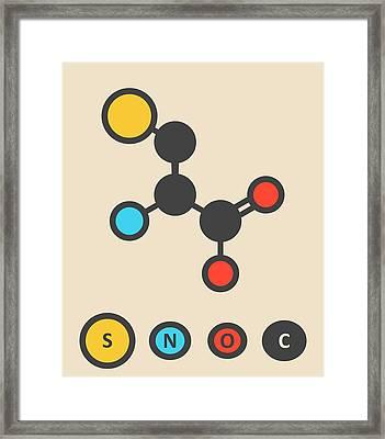 Cysteine Amino Acid Molecule Framed Print