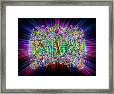 Cytochrome C Oxidase Molecule Framed Print by Laguna Design