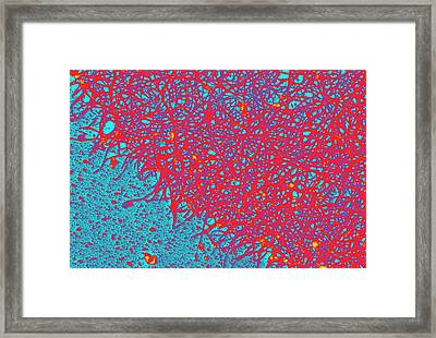 Cytoskeleton Framed Print by Ammrf, University Of Sydney