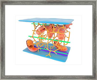 Cytoskeleton Framed Print by Science Photo Library