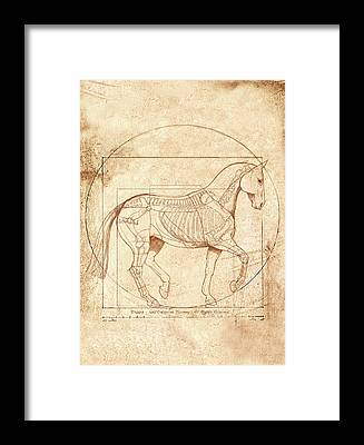 Dressage Framed Prints